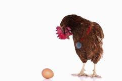 鸡赢利地区 免版税库存图片