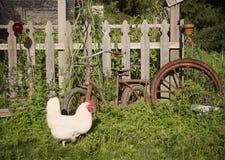 鸡运行中 免版税库存照片