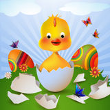鸡逗人喜爱的复活节 库存照片