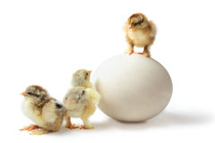 鸡阶层 免版税库存照片