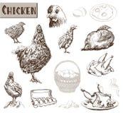 鸡饲养 库存照片