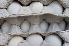 鸡鸡蛋在纸板包裹的行在 免版税图库摄影