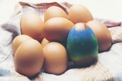 鸡鸡蛋查出白色 库存图片