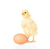 鸡鸡蛋 背景查出的白色 图库摄影