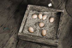 鸡鸡蛋 库存照片