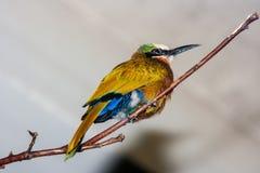 鸣禽类鸟坐肢体 库存照片