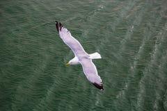 鸥下面飞行在绿色水 库存照片