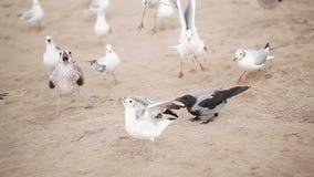鸥和乌鸦在海滩 免版税库存图片