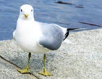 鸥海运 免版税库存照片