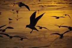 鸥飞行在黎明 库存照片