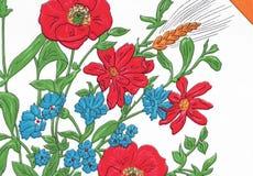 鸦片和矢车菊在夏天 免版税库存图片