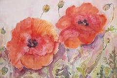 鸦片和芽水彩绘画 免版税库存照片