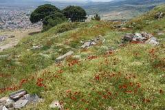鸦片在希腊废墟中增长 图库摄影