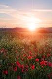 鸦片域横向在夏天日落的英国乡下 免版税库存图片