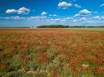 鸦片域 在视图之上 很多红色花 n 免版税库存照片