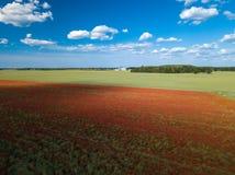 鸦片域 在视图之上 很多红色花 n 免版税图库摄影