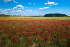鸦片域 在视图之上 很多红色花 n 库存图片