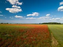 鸦片域 在视图之上 很多红色花 n 免版税库存图片