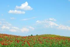 鸦片开花春天草甸和蓝天与云彩 免版税库存照片