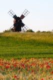 鸦片的领域在一台老风车前面的 免版税图库摄影