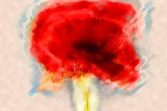 鸦片花或罂粟属rhoeas鸦片与光 免版税库存照片