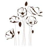 鸦片设计,花卉背景 免版税库存照片