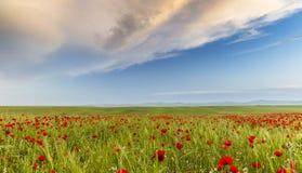 鸦片领域在其中一个阿塞拜疆的地区中 库存照片