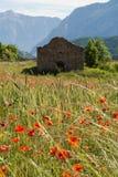 鸦片领域在普罗旺斯 免版税库存照片