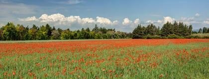 鸦片-横谷-普罗旺斯法国的领域 库存图片