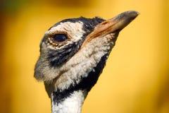 鸨鸟 免版税库存照片