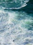 鸬鹚和波浪 库存图片
