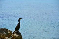 鸬鹚岩石海黑色蓝色 库存图片