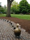 鸭子做方式 图库摄影