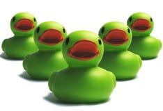 鸭子入侵 免版税库存图片