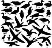 鸭子剪影 库存图片