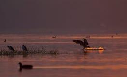 鸭子和其他鸟在湖 库存照片