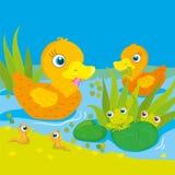 鸭子和青蛙在池塘 库存例证