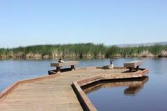 鸭子和鹅坐木码头 图库摄影