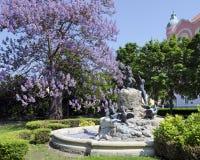 鸭子喷泉在布拉索夫 库存照片