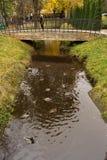鸭子在一个池塘在公园 库存图片