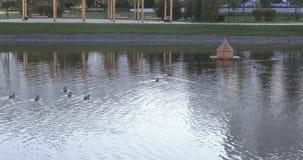 鸭子在一个池塘在公园 股票视频