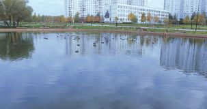 鸭子在一个池塘在公园 影视素材