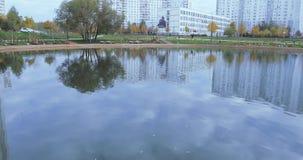 鸭子在一个池塘在公园 股票录像
