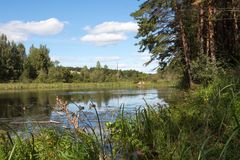 鸭子在森林池塘 库存图片
