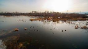 鸭子在池塘 股票录像