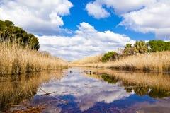 鸭子在盐水湖 免版税库存照片