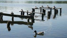 鸭子坐在湖的树 股票录像