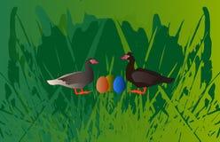 鸭子夫妇用五颜六色的鸡蛋 图库摄影