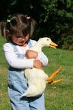 鸭子奋斗 免版税库存图片