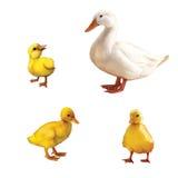 鸭子家庭 免版税库存照片